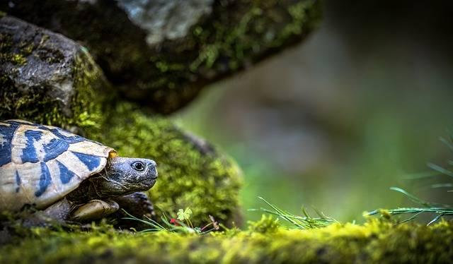 Turtle Landscape - Free photo on Pixabay (344546)