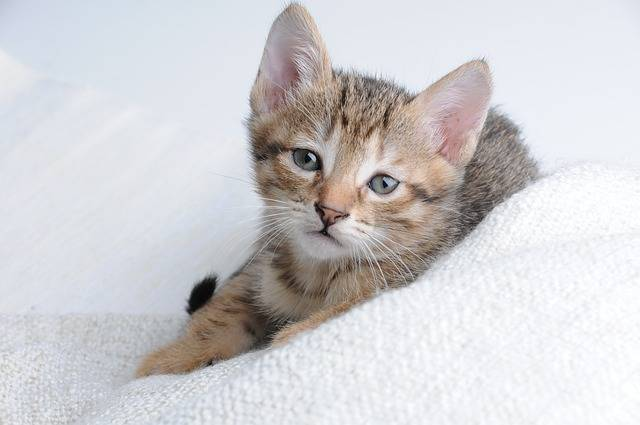 Cat Small Sleeps - Free photo on Pixabay (347152)