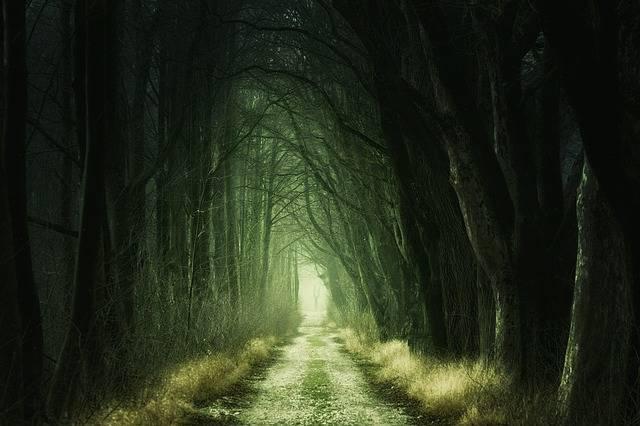 Secret Forest Darkness - Free photo on Pixabay (350079)