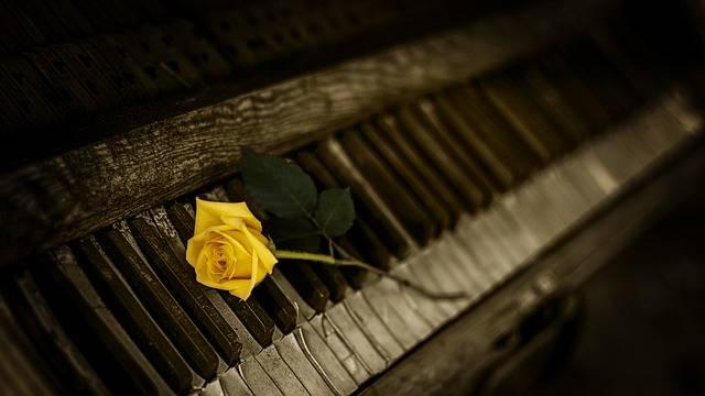 Piano Rose Yellow - Free photo on Pixabay (354333)