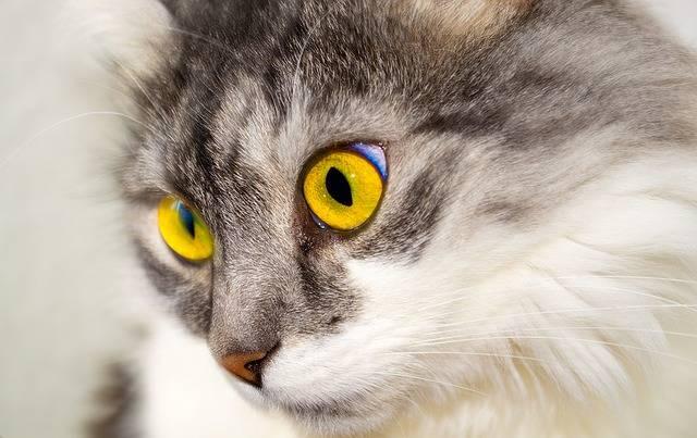 Cat Cat'S Eyes - Free photo on Pixabay (356019)