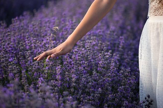 Lavender Nature Flowers - Free photo on Pixabay (356644)
