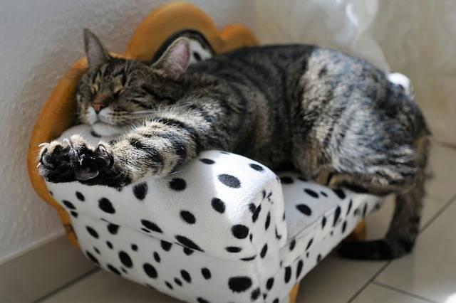 Cat Mieze Cat'S Eyes - Free photo on Pixabay (358741)