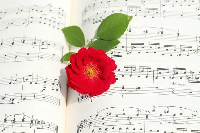 Rose Roses Flowers Romantic - Free photo on Pixabay (359131)