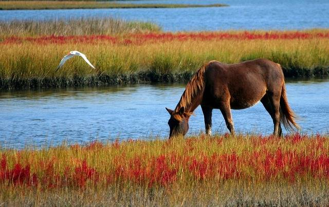Horse Wild Marsh Pony - Free photo on Pixabay (362286)