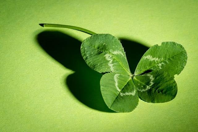 Klee Four Leaf Clover Green - Free photo on Pixabay (363406)