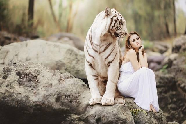 Nature Animal World White Bengal - Free photo on Pixabay (365001)