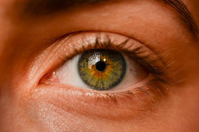 Eye Iris Sight - Free photo on Pixabay (365710)