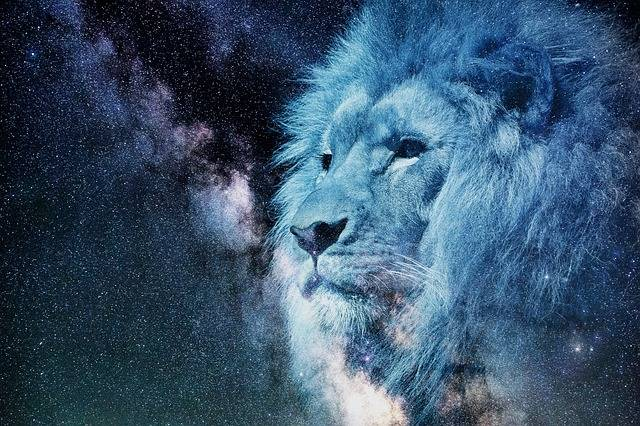 Lion Starry Sky Night - Free image on Pixabay (365758)