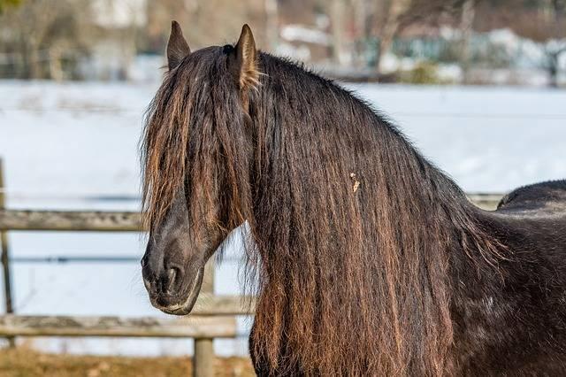 Horse Coupling Black Forest - Free photo on Pixabay (366414)