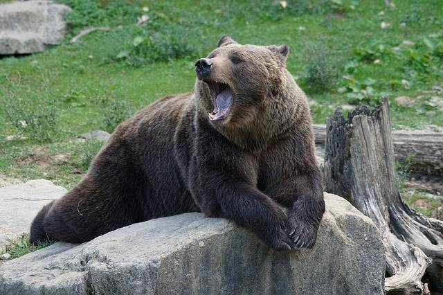 Brown Bear Zoo - Free photo on Pixabay (366467)
