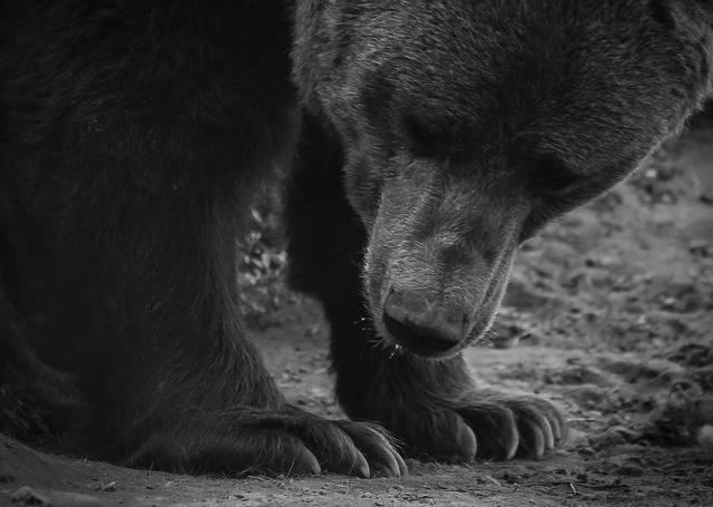 Bear Paw Beast - Free photo on Pixabay (366562)