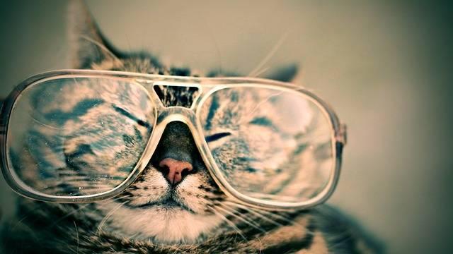 Cat Glasses Eyewear - Free photo on Pixabay (368635)