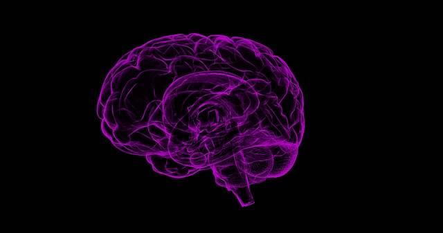 Brain Human Anatomy - Free image on Pixabay (372664)