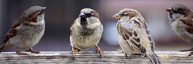 Sparrows Family Birds - Free photo on Pixabay (372993)