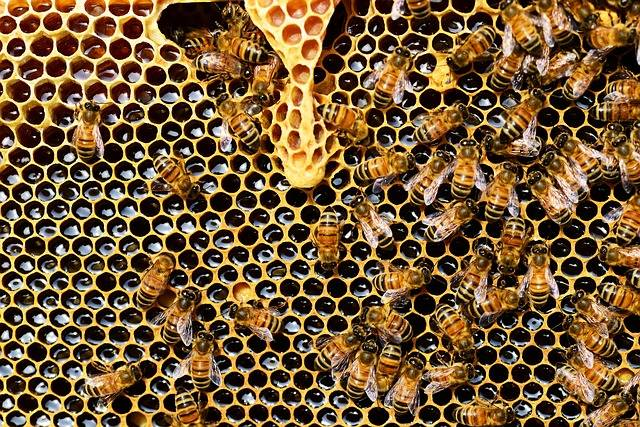 Beehive Bees Honeycomb Honey - Free photo on Pixabay (373523)