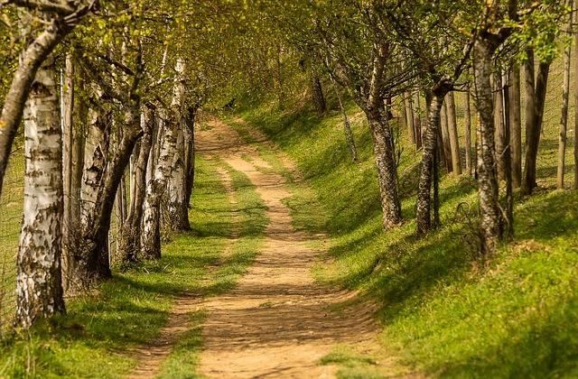 Nature Trees Away - Free photo on Pixabay (374739)