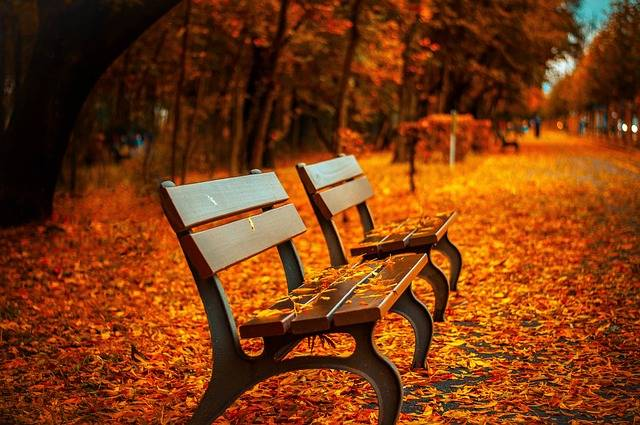 Bench Fall Park - Free photo on Pixabay (377156)