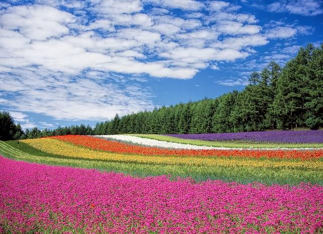 Flower Field Flowers Colors - Free photo on Pixabay (377159)