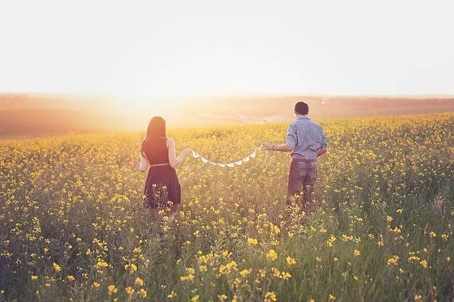 Canola Couple Field - Free photo on Pixabay (378508)