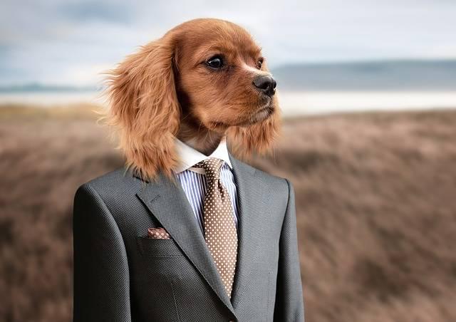 Dog Puppy Young - Free photo on Pixabay (379160)