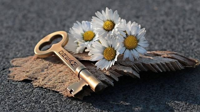 Key Heart Daisy - Free photo on Pixabay (379207)