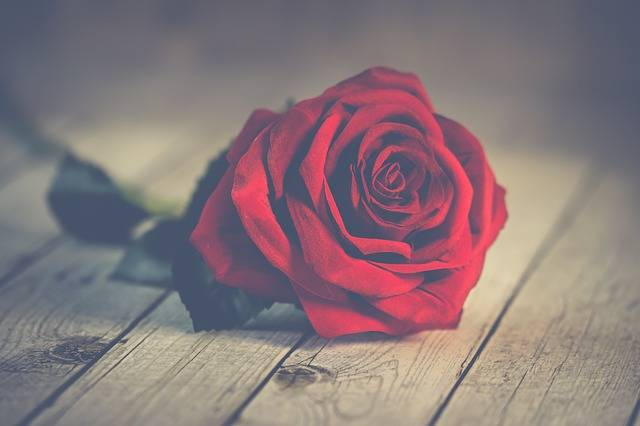 Roses Romantic Valentine In - Free photo on Pixabay (379579)