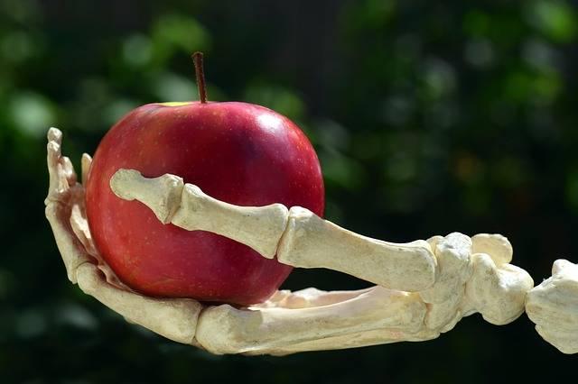 Apple Hand Bone Snow - Free photo on Pixabay (384478)