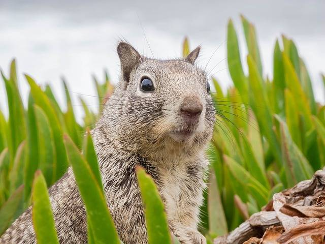 Surprised Sweet Animal - Free photo on Pixabay (384950)