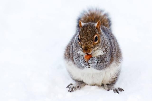 Animal Brown Cold - Free photo on Pixabay (385056)
