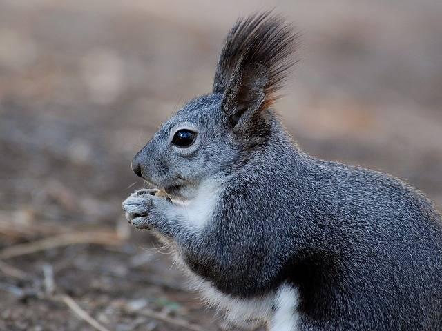 Squirrel Animal Close-Up - Free photo on Pixabay (385120)