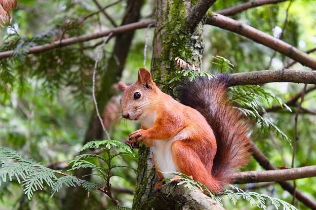 Animal Squirrel Rodent - Free photo on Pixabay (385132)
