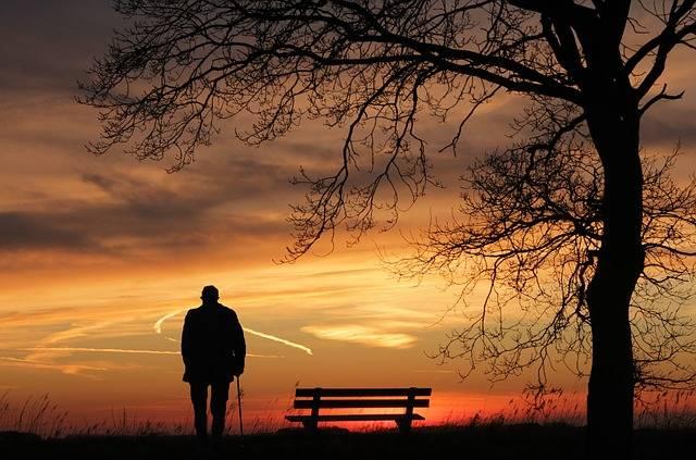 Sunset Tree Silhouette - Free photo on Pixabay (386934)