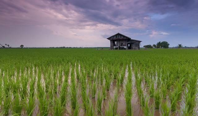 Beautiful Cottage Rice Field - Free photo on Pixabay (388049)