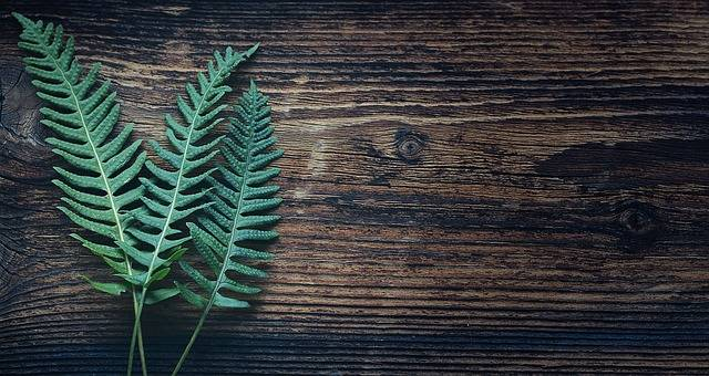 Fern Plant Nature - Free photo on Pixabay (388101)