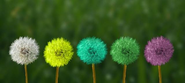 Dandelion Colorful People Of Color - Free photo on Pixabay (389726)