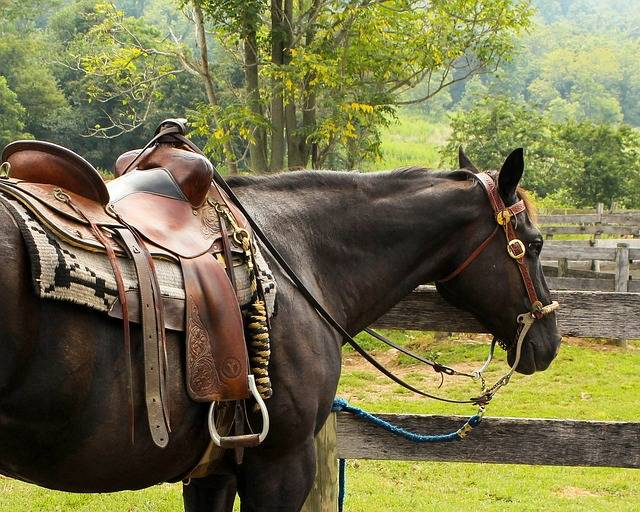 Horse Western Saddle Pomel - Free photo on Pixabay (389741)