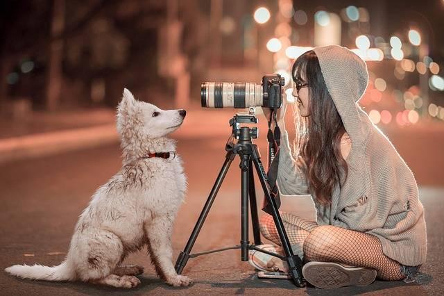Puppy Dog Pet - Free photo on Pixabay (391169)