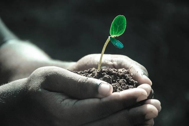Hands Macro Plant - Free photo on Pixabay (391599)