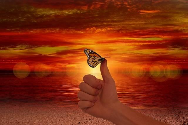 Like Thumb Butterfly - Free photo on Pixabay (392679)