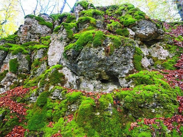 Stone Moss Bemoost - Free photo on Pixabay (394416)