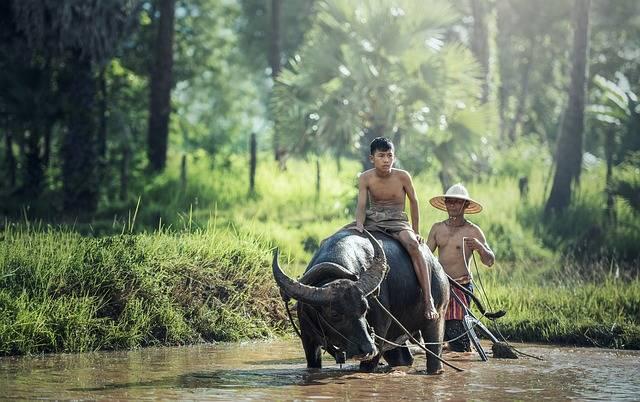 Buffalo Riding Agriculture - Free photo on Pixabay (394871)