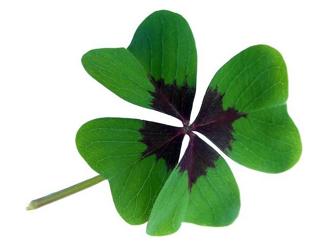 Lucky Clover Klee Luck Four Leaf - Free photo on Pixabay (396451)