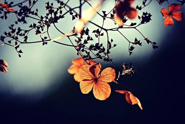 Flower Branch Twig Autumn - Free photo on Pixabay (398724)
