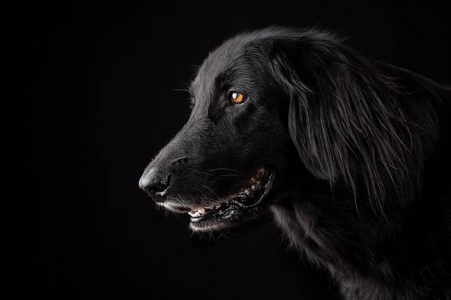 Animal Dog Pet - Free photo on Pixabay (400502)