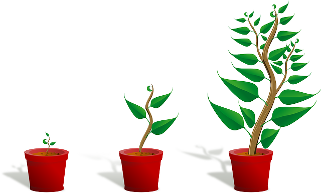 Sapling Plant Growing - Free vector graphic on Pixabay (401996)