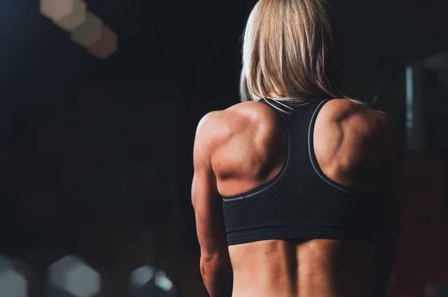 Training Rmuscles Back - Free photo on Pixabay (403463)