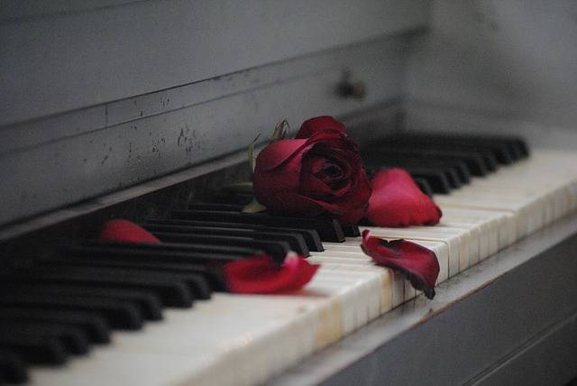 Piano Rose Red - Free photo on Pixabay (406490)