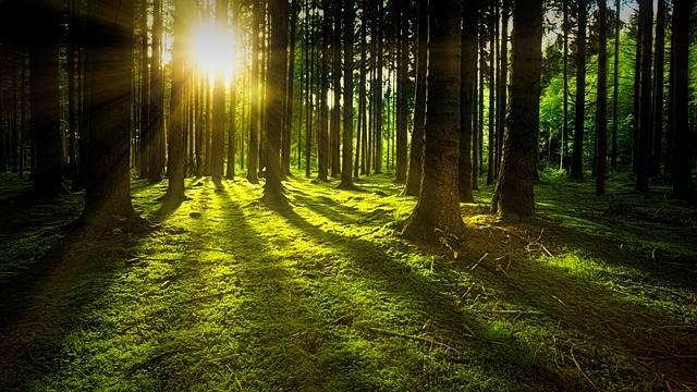 Nature Forest Sun - Free photo on Pixabay (406504)