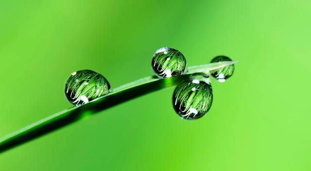 Water Drops Grass - Free photo on Pixabay (406804)